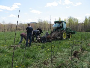 2012 Tree Planting