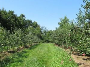 2012 Early Orchard